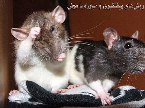 مبارزه با موش